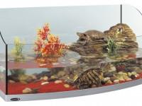 Красноухая черепаха. Содержание в домашних условиях