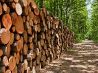 Экологическая деревообработка в России